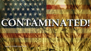 HIN-Contaminated-Wheat-Grain